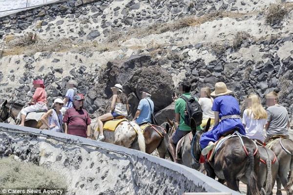 Lừa trên đảo Santorini gục chết khi phải vận chuyển quá nhiều khách du lịch nặng ký