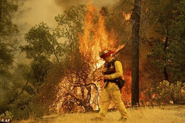 Khoảnh khắc đáng yêu: Chú nai nhỏ hôn sĩ quan đã cứu sống mình trong trận cháy rừng ở Mỹ