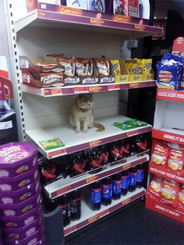 Cần dụi mắt trước khi vào siêu thị kẻo 'té ngửa' vì choáng