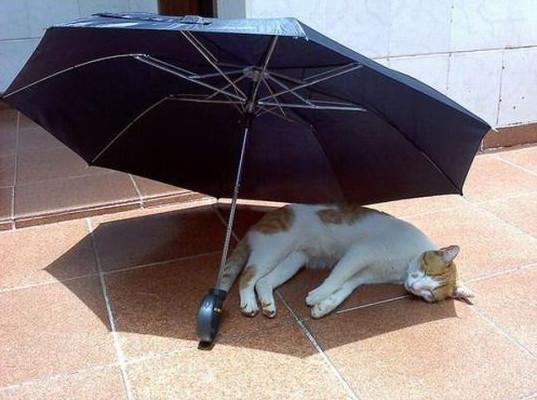 Chết cười với phương pháp tránh nóng siêu nhây của mèo Nhật Bản và bồ câu Đài Loan