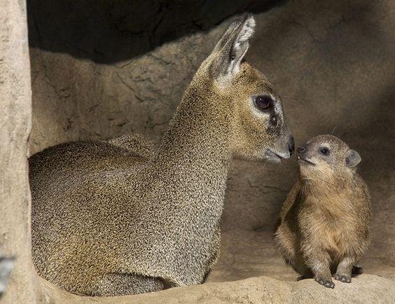 Đa man đá - Thể loại động vật gì mà đọc cái tên thôi cũng muốn trẹo lưỡi rồi?