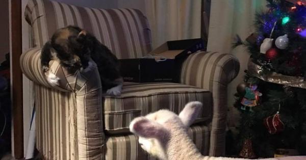 Chuyện cô mèo kết bạn với cừu làm tan chảy trái tim cộng đồng mạng