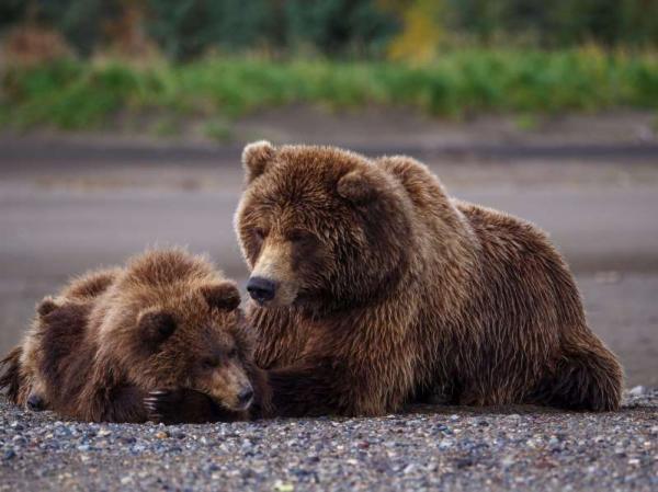 Sau 17 năm chỉ sống trong cũi hẹp, lần đầu tiên chú gấu được nô đùa ở nhà mới