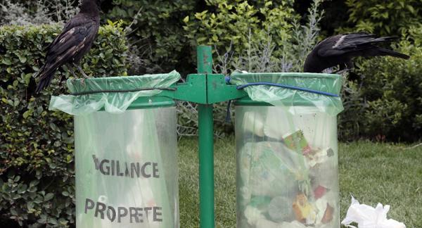 6 chú quạ được huấn luyện để nhặt rác ở công viên Pháp khiến dân tình bất ngờ vì quá thông minh