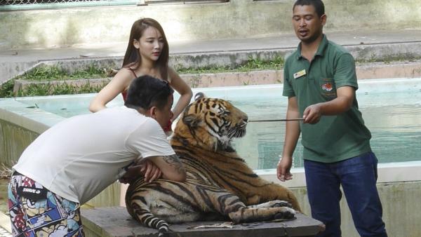 Tạo dáng cùng hổ - Khoảnh khắc du lịch đáng nhớ được tạo nên từ nỗi đau loài vật