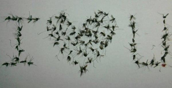 Hết hồn với bộ sưu tập xác muỗi ép khô được xếp hàng, đánh số thứ tự ngay ngắn cực công phu
