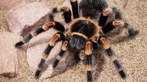 Ngắm nhìn 6 loài nhện đáng sợ này, không chừng đêm nay bạn sẽ mơ thấy chúng đấy!