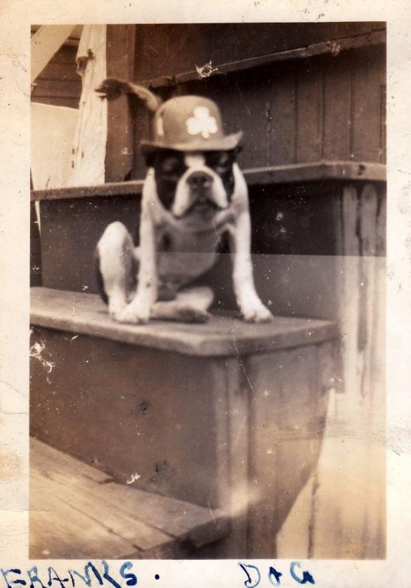 Động vật cũng có ảnh vintage và chúng dễ thương chẳng khác gì ngày nay
