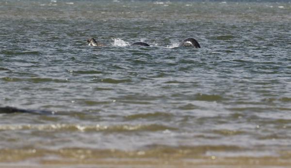 Du khách ghi lại hình ảnh lạ trên hồ Loch Ness, nghi ngờ là quái vật nổi tiếng nhất lịch sử