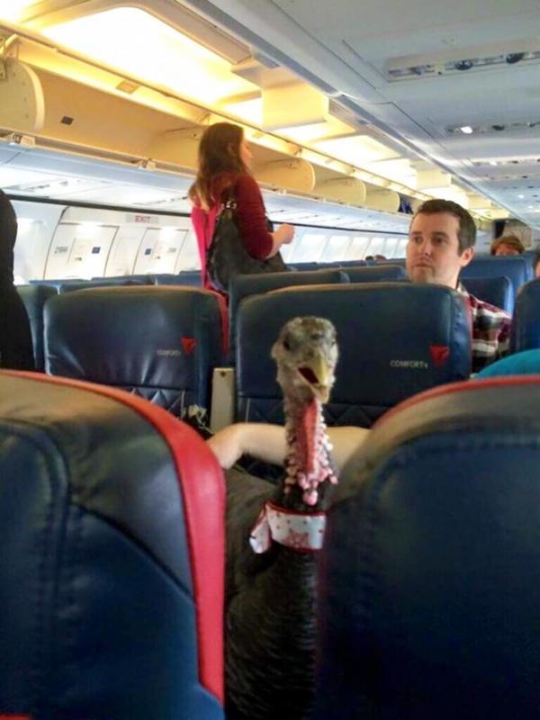 Những hình ảnh 'đố nhịn nổi cười' trên các chuyến bay