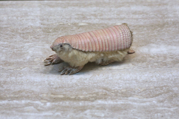 Mẹ thiên nhiên quả thật 'mặn mà' khi tạo ra những sinh vật thú vị thế này