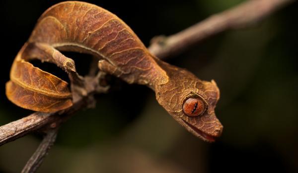Khả năng 'hóa trang' của 10 loài sinh vật khiến bạn chỉ biết 'ngả mũ' thán phục