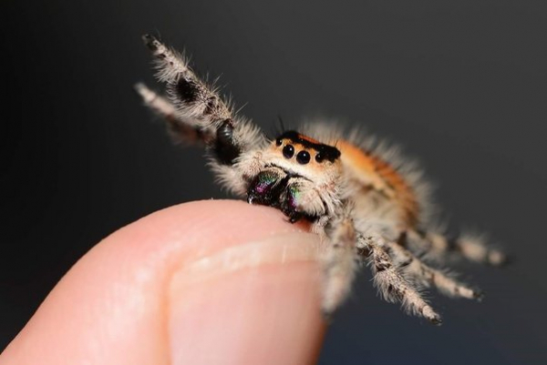 Những loài côn trùng có ngoại hình 'cute lạc lối' sẽ khiến bạn cảm thấy yêu hơn rất nhiều