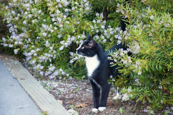 New Zealand đề xuất... cấm nuôi mèo để bảo vệ đa dạng sinh học địa phương