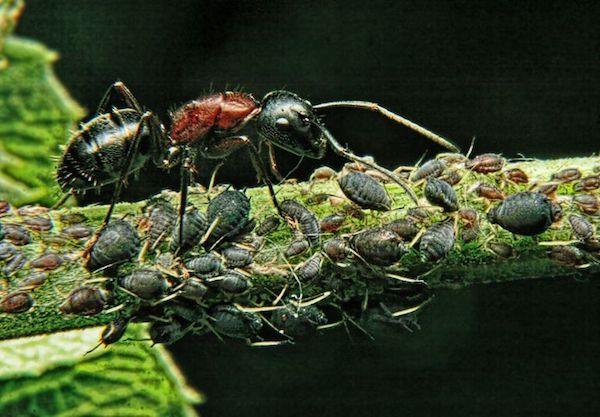 15 sự thật thú vị về động vật: Giun dẹp đực phải đánh nhau xem ai được 'nằm trên', ruồi bọ cạp 'yêu là đòi quà'