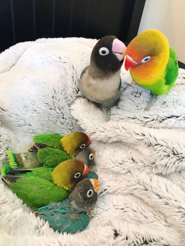 Chuyện tình đáng yêu của đôi chim vẹt khác nhau như trời và đất sẽ khiến trái tim bạn 'tan chảy'