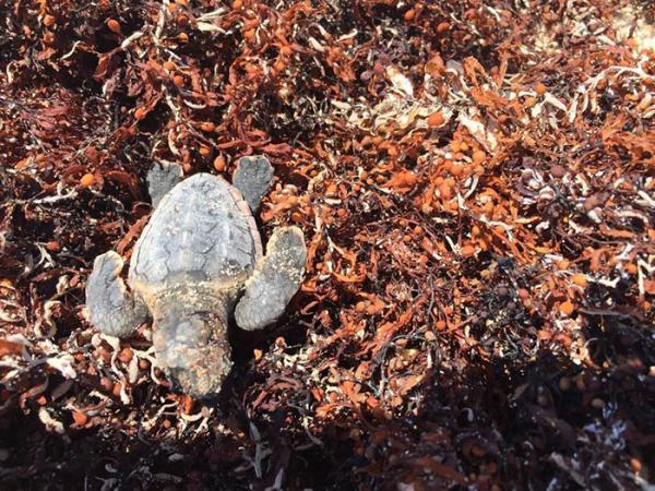 Hình ảnh chú rùa trở lại bãi biển ô nhiễm nhất Ấn Độ sau 20 năm cho thấy kỳ tích luôn nằm trong tay con người