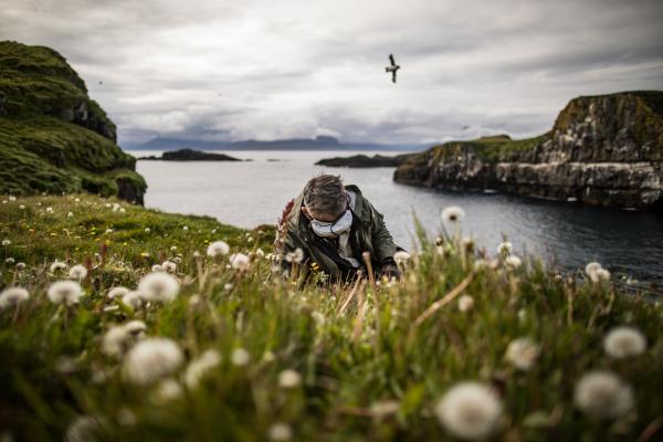 Lý do nào đằng sau sự biến mất của hải âu cổ rụt - một trong những loài chim độc đáo nhất thế giới?