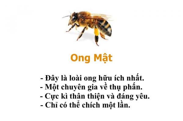Bạn có biết chỉ riêng loài ong cũng có một bộ 'bách khoa toàn thư' hài hước thế này không?