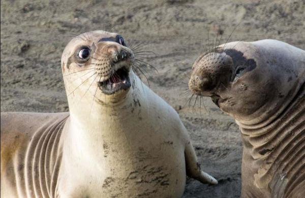 Cười thả ga với Comedy Wildlife Photography Award - cuộc thi những khoảnh khắc xàm xí của động vật hoang dã