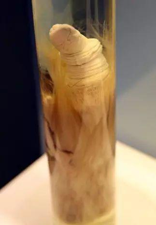 Có gì trong bảo tàng trưng bày 'của quý' muôn loài ở Iceland khiến khách tham quan phải ngượng chín mặt?