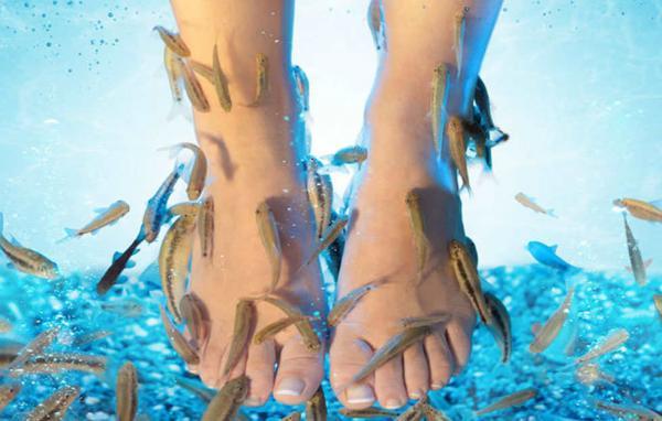 Từ 5 ngón chân thành... không ngón nào - Hậu quả tai hại sau một lần massage cho cá rỉa chân