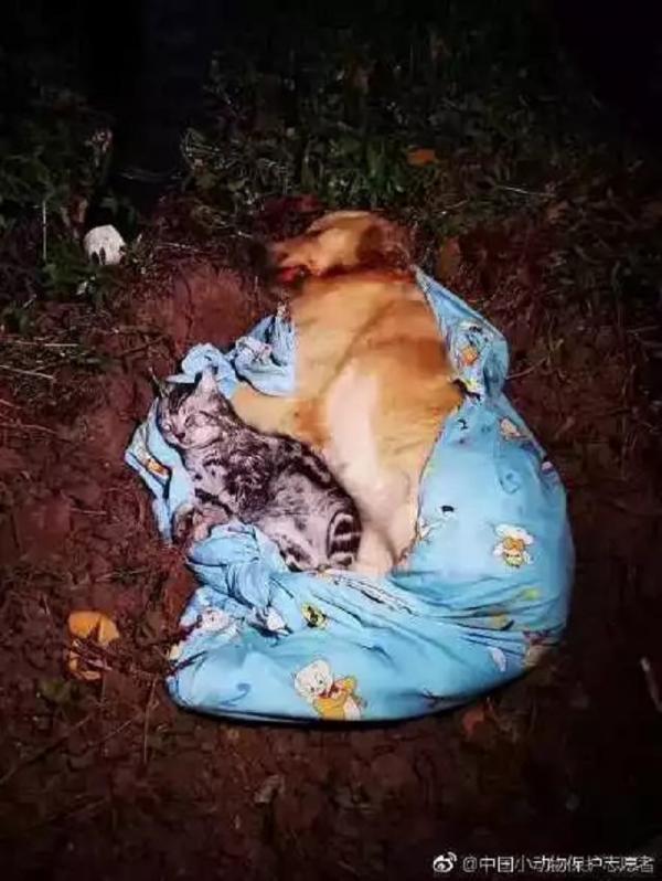 Giận cá chém... chó mèo, người chồng ném thú cưng từ tầng 21 xuống sau khi cãi nhau với vợ