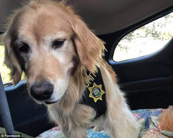 Một chú chó vừa được bầu làm thị trưởng của thị trấn California và được tặng cả xe riêng