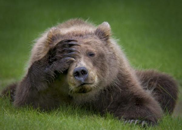 Bỗng thấy đời đáng yêu với 20 khoảnh khắc 'dễ cưng' của các loài động vật hoang dã