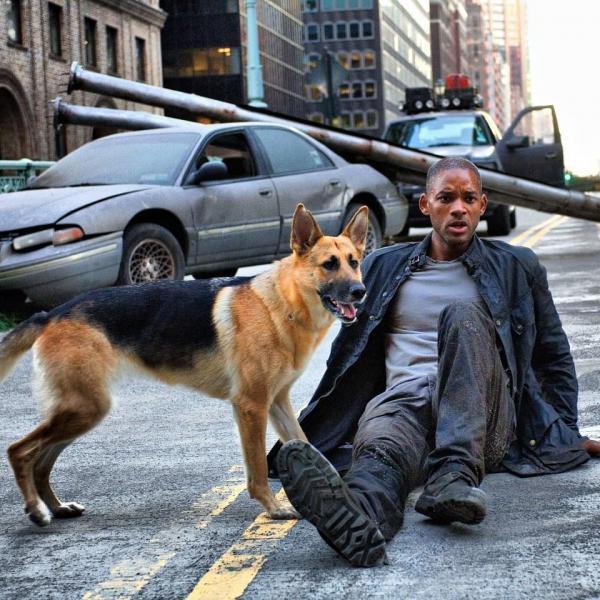 Hơn 11 năm trôi qua, chú chó Sam trong 'I Am Legend' vẫn sống rất vui vẻ và khỏe mạnh
