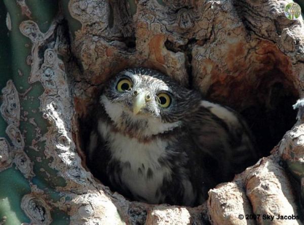 15 loại tổ chim có kiến trúc đặc biệt đến mức ngay cả loài người cũng thấy thán phục