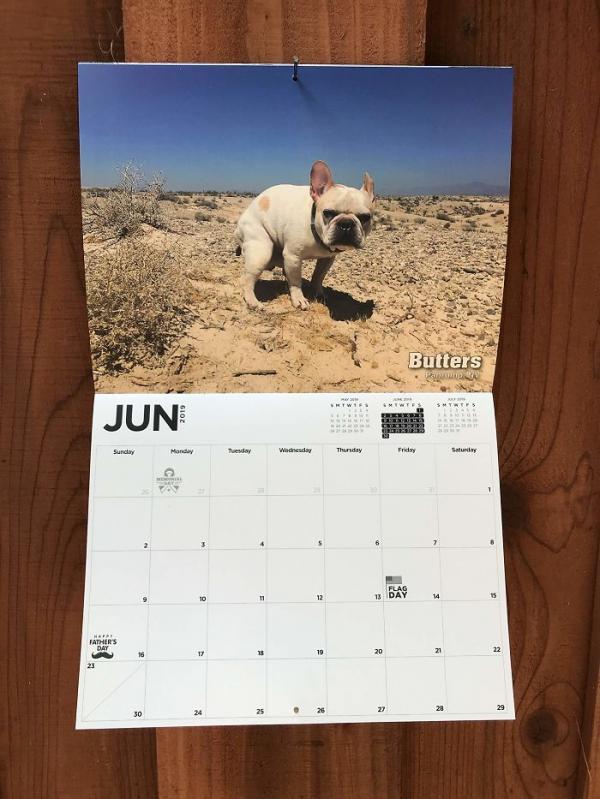 Lịch treo tường 'Những chú chó đi... ị': Món quà đầu năm có nguy cơ phá hủy mọi mối quan hệ