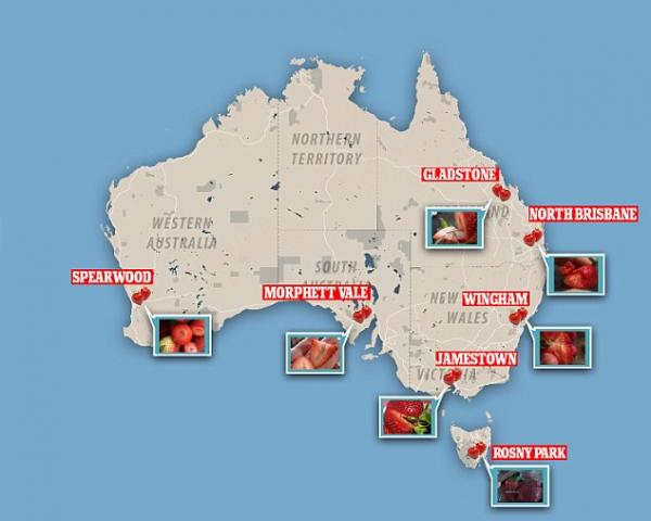 Phát hiện hơn 100 trường hợp giấu kim trong trái cây khiến ngành trồng trọt của nước Úc lao đao