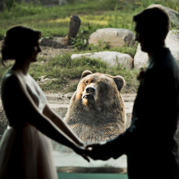 Gấu xám Nga, lạc đà Alpaca và 'đồng bọn' phản ứng thế nào khi thấy loài người 'tay trong tay'?