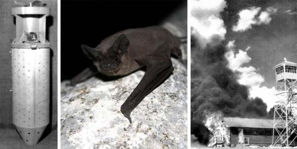 10 loài vật từng 'vào sinh ra tử' cùng con người trong chiến tranh