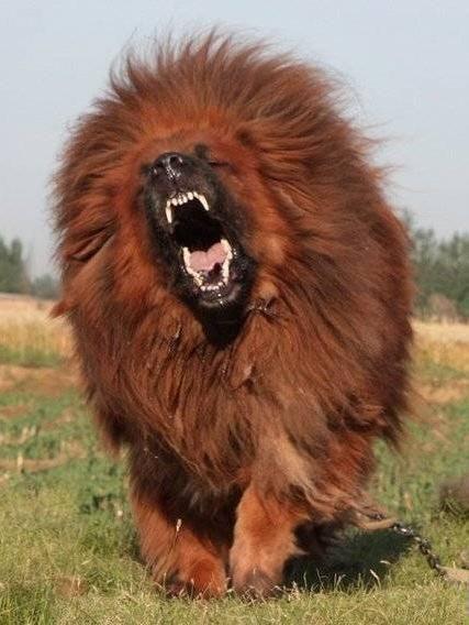 10 em thú cưng đắt đỏ nhất thế giới