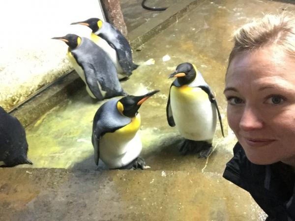 Hai chú cánh cụt đực đồng tính cố bắt cóc con của một cặp cánh cụt khác