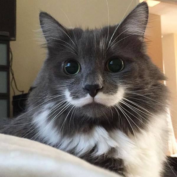 Cùng ngắm nghía các 'boss' mèo có bộ lông đặc biệt nhất thiên hà