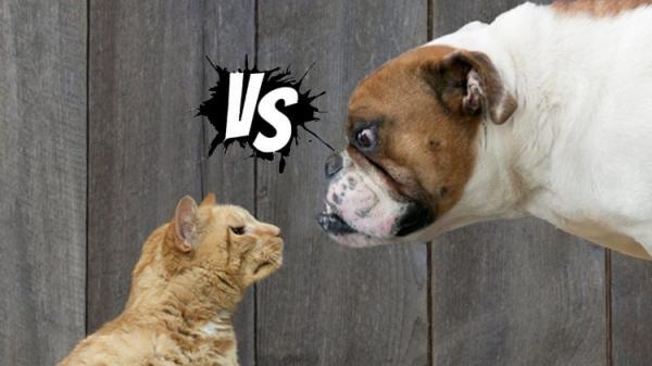 Khoa học đã chứng minh: Loài mèo thực sự tốt tính, chúng chỉ giả vờ làm lơ thôi