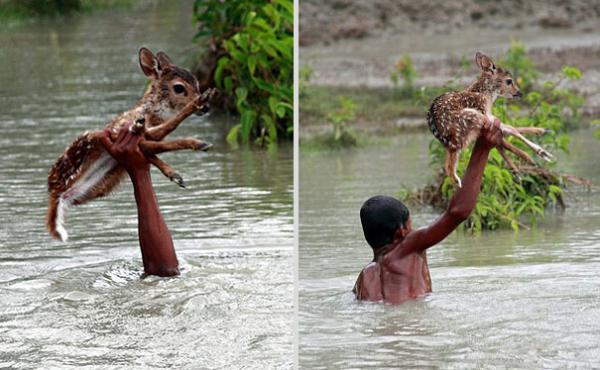 Hóa ra dễ thương chính là 'vũ khí sinh tồn' của động vật nhằm đối phó với con người