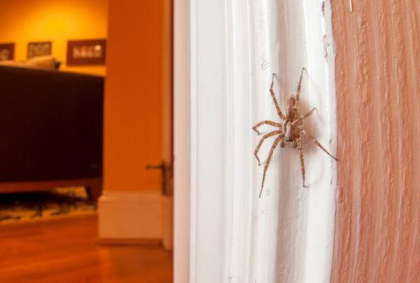 Đừng nhẫn tâm 'xuống tay' với loài nhện nữa, chúng vô hại hơn bạn nghĩ đó!