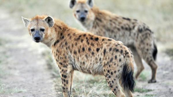 10 loài động vật có chiếc hàm khỏe nhất thế giới