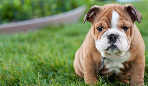 Bạn sẽ hạnh phúc hơn với một chú chó ở bên cạnh