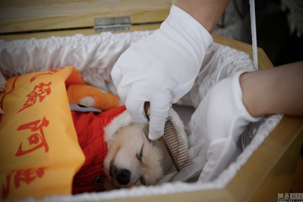 Giáo sư đại học bỏ 340 triệu VNĐ làm đám tang cho chó cưng và câu chuyện khiến nhiều người suy ngẫm