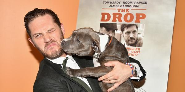 Góc đáng yêu: Tom Hardy cười tít mắt, tranh thủ cưng nựng chú chó cảnh vệ tại buổi họp báo 'Venom'