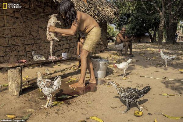 Bộ tộc nguyên thủy kì lạ nhất thế giới đang đứng trước nguy cơ tuyệt chủng vì nạn phá rừng trái phép