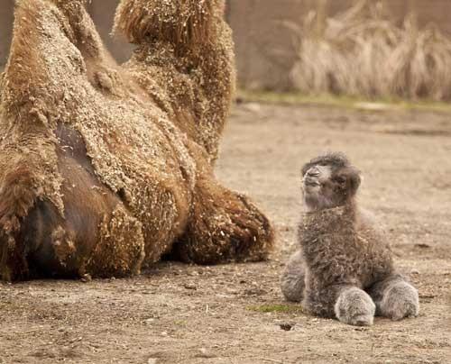 20 em bé động vật trông cứ như 'con nhặt từ bãi rác' so với cha mẹ chúng