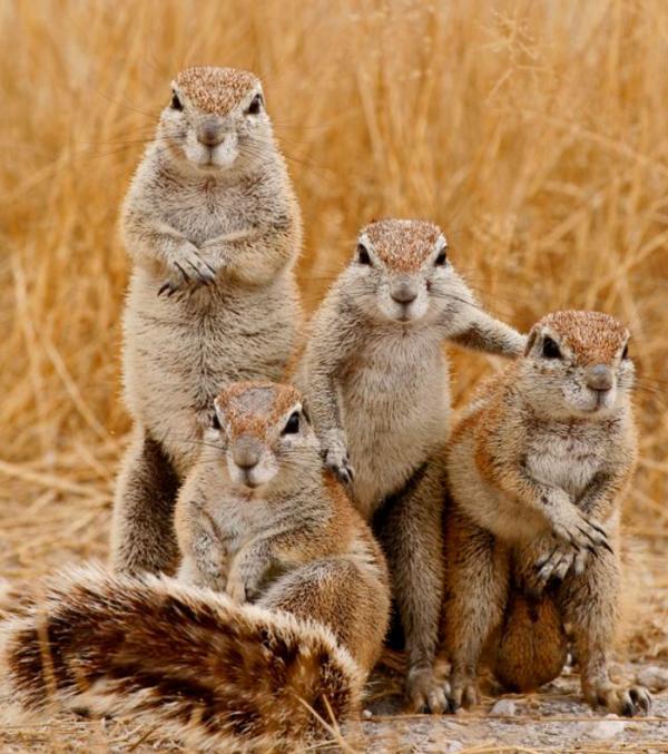 Muôn kiểu pose dáng 'ngầu lòi' như chụp bìa đĩa của các anh chị động vật 'dân chơi'
