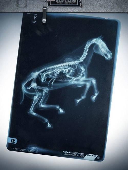 Tìm hiểu tuyệt tác của thiên nhiên qua những tấm ảnh X-quang chụp bào thai động vật