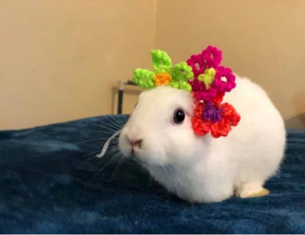 Sinh ra không có tai, bé thỏ được cô chủ 'tặng bù' tai bằng len